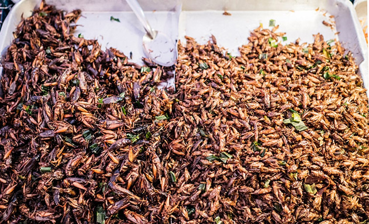 Would you eat snacks made with insects?